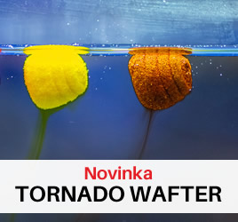 Novinky: Haldorado Tornadp Wafters